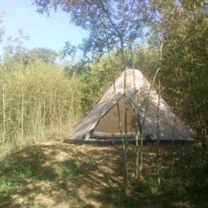 Tipi des wallabies n°2